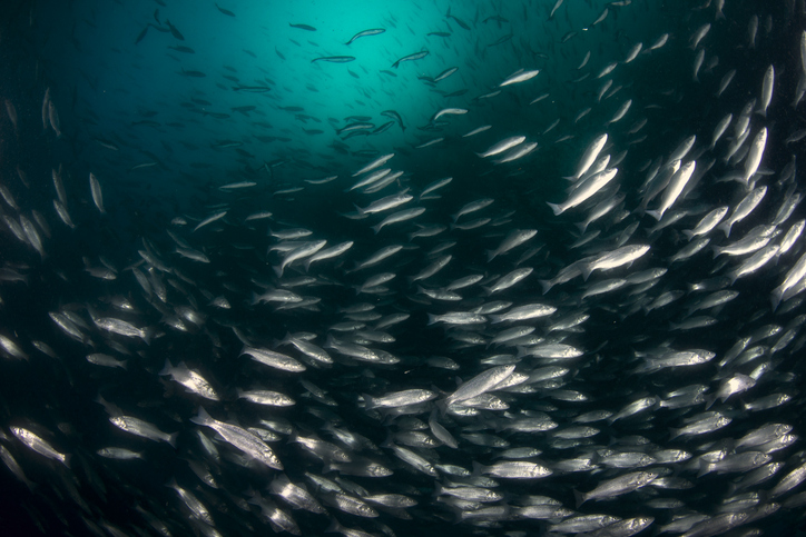 Go Fish Why oxygen needs to be your top aquaculture priority